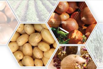 Toepassing van Royal MH in aardappelen en uien