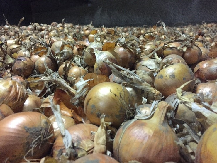 Goede toepassing ROYAL MH in uien is de basis voor bewaring